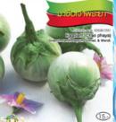 Round-Eggplant-seed-เมล็ดเขือเปราะ