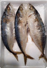 Gestoomde Makreel