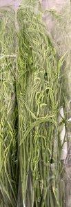Acacia Leaf 100gr. ชะอม