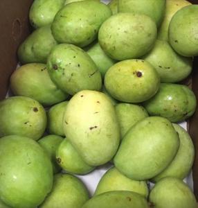 Jonge Mango 1kg. มะม่วงดิบ