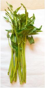 ผักบุ้งไทย