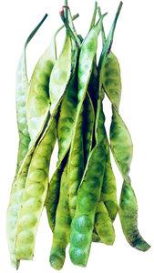 Bitter bean (whole) 500gr. สะตอฝัก